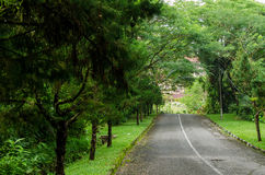 Nature Road Royalty Free Stock Photography