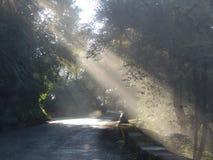 Nature, Road, Tree, Vegetation royalty free stock photos
