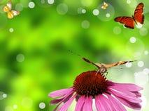 Nature romance Royalty Free Stock Image