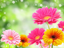 Nature romance Royalty Free Stock Images