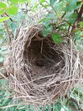 Nature Rose Bush Birds Nest nature stock photos