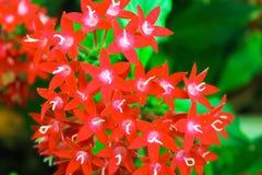 Nature rouge de détail de fleurs Image libre de droits