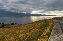 Autumn colors. Nature, rows of vineyard terraces in famous Lavaux wine region, overlooking the northern shores of lake Leman near Lausanne city, canton of Vaud Royalty Free Stock Photos