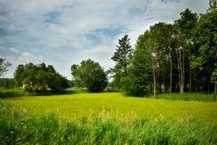 Nature Rural Landscape Stock Image