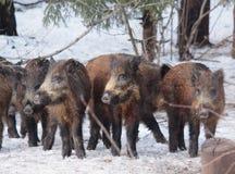 Nature russe, région de Voronezh image libre de droits