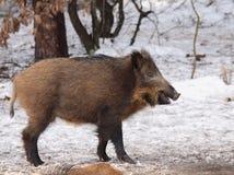 Nature russe, région de Voronezh images libres de droits