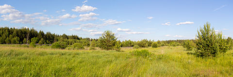 The Nature Of Russia. Panorama of flowering meadows. The photo was taken in Central Russia. Panorama pieced together from multiple photos Royalty Free Stock Photography