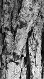 Nature rustique Images libres de droits