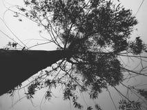 Nature& x27; s秀丽 图库摄影