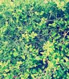 Nature& x27; s绿色秀丽 库存图片