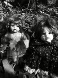 Nature& x27; s Annabelle fotografía de archivo