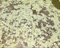 Nature's art. Elephant Rocks State Park in Missouri Ozark Mountains Stock Images