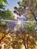 NATURE& x27;S BEAUTIFUL SUNRISE    SURROUNDING WITH MANY TREES royalty free stock photo