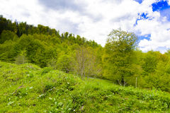 Nature`s Bliss. Depicts a beautiful rural countryside theme with lots of green light. Forest in the background, pasture in the foreground, blue skies, puffy Stock Photography