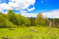 Nature`s Bliss. Depicts a beautiful rural countryside theme with lots of green light. Forest in the background, pasture in the foreground, blue skies, puffy Royalty Free Stock Photo