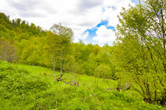 Nature`s Bliss. Depicts a beautiful rural countryside theme with lots of green light. Forest in the background, pasture in the foreground, blue skies, puffy Stock Photos