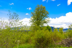 Nature`s Bliss. Depicts a beautiful rural countryside theme with lots of green light. Forest in the background, pasture in the foreground, blue skies, puffy Royalty Free Stock Photos