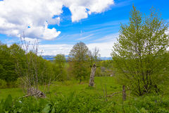 Nature`s Bliss. Depicts a beautiful rural countryside theme with lots of green light. A pasture in the forefront, blue skies, puffy clouds Stock Images