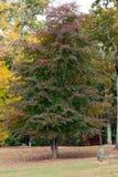 Nature's Garland Stock Photography