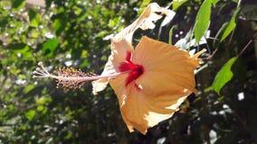 Nature& x27; s-Geschenk! Sein eine Blume lizenzfreie stockfotografie