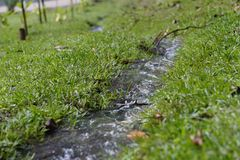 Nature`s grass of small waterstream stock photos