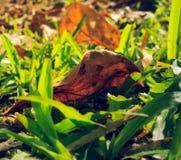 Nature& x27; s Greenery Obrazy Stock