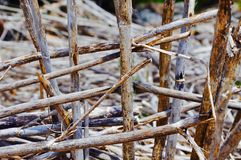 Nature's Grid: Sticks Weaving Together Royalty Free Stock Photography