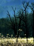 Nature&-x27; s kanwa zdjęcia royalty free