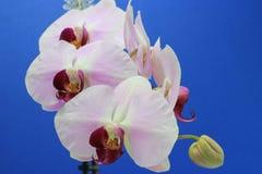 Nature& x27; s kwiat Obraz Royalty Free