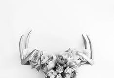 Nature& x27; s nagroda Obrazy Stock