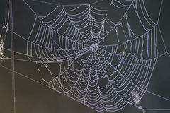 Nature's own artwork, cobweb Stock Image