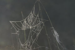 Nature's own artwork, cobweb Royalty Free Stock Photo