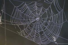 Nature's own artwork, cobweb Stock Image