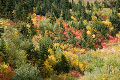 Nature's Painting. Teton autumn foliage bursts forth in its myriad colors stock photography