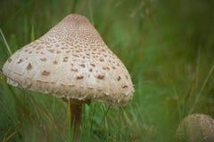 Nature& x27; s parasol Zdjęcie Royalty Free