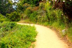 Nature's Path. A beautiful path through nature Royalty Free Stock Images