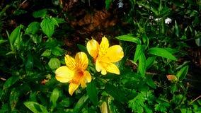 Nature& x27; s piękno Zdjęcie Stock