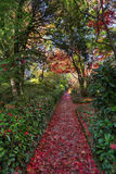 Nature's red carpet.  Pathway in Autumn Stock Photography