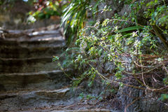 Nature's steps Royalty Free Stock Image
