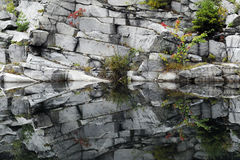 Nature\'s Symmetry. The symmetry of reflections on rocks and wild plants growing in a water-filled quarry Stock Image
