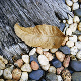 Nature's texture. Fallen leaf on wood plank and pebbles Stock Images