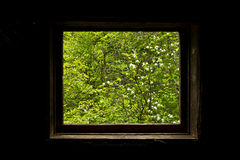 Nature's Window Royalty Free Stock Photos