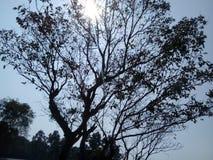 Nature& x27; s wypięknia drzewa obrazy stock