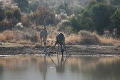 Nature sauvage photographie stock libre de droits