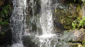 Nature scénique de bel étang de feuille et d'eau douce de plante verte de cascade banque de vidéos