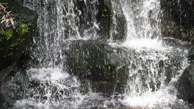 Nature scénique de belle cascade dans la feuille superbe de plante verte de mouvement lent banque de vidéos