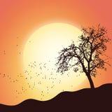 Nature scénique de paysage de feuille d'arbre d'automne Image libre de droits