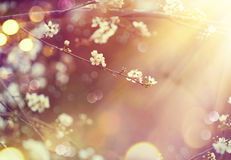 Nature scene with blooming tree and sun flare Stock Images