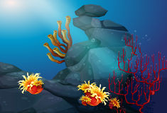 Nature scene with coral reef underwater Royalty Free Stock Images