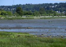 Courtenay estuary low tide in Spring. Nature scene at the Courtenay estuary during low tide, Vancouver Island British Columbia Canada royalty free stock photo